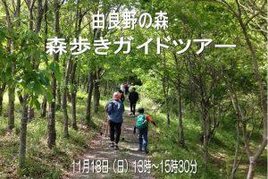 11月18日(日)森歩きガイドツアー @ 由良野の森 | 上浮穴郡久万高原町 | 愛媛県 | 日本