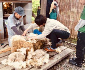 羊の毛刈り体験 羊Days day2 @ 由良野の森 | 久万高原町 | 愛媛県 | 日本